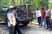 إندونيسيا تستعين بالقناصة للتصدي للقردة البرية