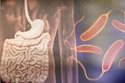 بكتيريا الأمعاء تُحَفِّز عمل جين يحمي من السكري