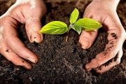 تربة تُسرّع نمو الأشجار