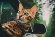 هذه القطة محظوظة أكثر من بعض البشر! يتابعها 200 ألف على إنستغرام.. وتسافر العالم في رفاهية.. احكم بالصور