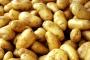 البطاطا اللبنانية تنتظر الدخول إلى الأردن