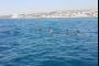 بالصور: بعد مسحٍ شامل.. العثور على 4 مواطنين غرقوا في صيدا!