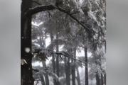 بالفيديو ... الثلوج تغطي غابة الارز