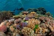 صور: المكسيك تنشيء أكبر محمية للحياة البحرية بأمريكا