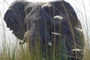 شاهد حين يغضب الفيل من 'الصور'.. ويدهس 'المتطفل'