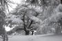 شاهدوا 10 مناظر آسرة للثلوج عربياً وعالمياً