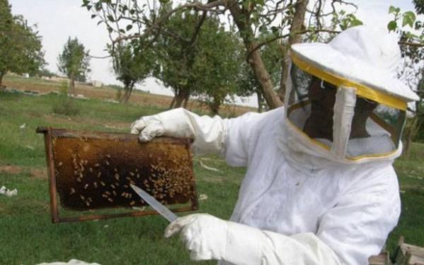 تعاونيات مربي النحل: لحماية القطاع من السرقة والتعديات