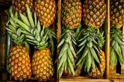 بالفيديو ...  ضبط 745 كيلوغراماً من الكوكايين في ثمار أناناس