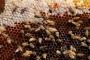 القبض على صبيين بتهمة قتل نصف مليون نحلة