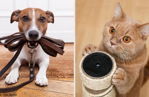 ما هي الحيوانات الأليفة التي ينصح بتربيتها؟