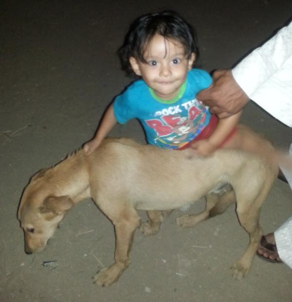 صدق أو لا تصدق.. 11 محاميا مصريا تصدوا للدفاع عن كلب!