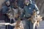 الصين تُسجل أول إصابة بشرية في العالم بفيروس (إتش7 إن4)