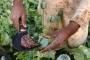 الكشف عن أرقام صادمة لزراعة الأفيون في أفغانستان