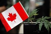 الماريغوانا قانونية في كندا اعتبارا من 17 تشرين الأول المقبل