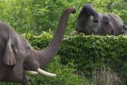 فيل يلتقط طفلاً بخرطومه ويقتله