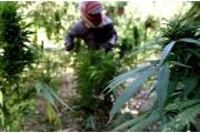دعوة الرئيس بري لتشريع زراعة الحشيشة في الميزان العلمي والفقهي (1)