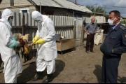 روسيا تعلن عن تفشٍ خطير لأنفلونزا الطيور