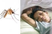 قرصات البعوض... معاناة عالمية