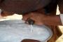 حليب الإبل.. دراسة تكشف الفائدة الكبرى