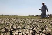 هل تصبح مصر دولة غير زراعية؟