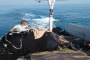 سحب مركب الصيد الذي غرق قبالة شاطىء عكار