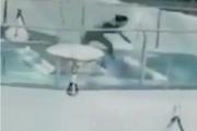 بالفيديو... تسقط بين أسماك القرش وتنجو بأعجوبة