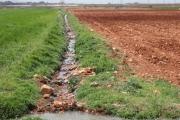 التلوث ينسحب على الحوض الأدنى لليطاني ... مياه الجنوب غير صالحة للريّ والاستعمال!