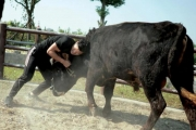 صينيون يمزجون بين الكونغ فو ومصارعة الثيران
