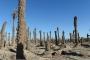 بالصور ... الجفاف يضرب بساتين النخيل في إيران