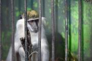 سجن مصرية 3 سنوات بتهمة التحرش بقرد