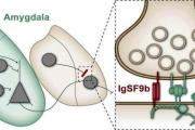 اكتشاف البروتين المسؤول عن القلق