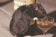 الشرطة الهندية تحمّل «الفئران» مسؤولية اختفاء ألف ليتر خمور!