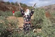 الدولة تقلص التصاريح للمزارعين الفلسطينيين في «منطقة التَماس»