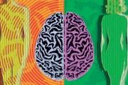 جينات تتحكم في اختلافات عقول الرجال والنساء