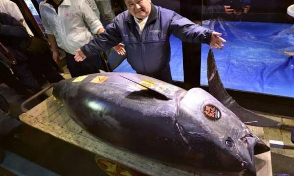 بالصور ... بيع سمكة تونة ضخمة مقابل 3,1 مليون دولار في اليابان