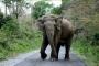 فيل غاضب يقتل رجلا حاول تنويمه مغناطيسيا
