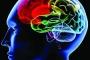 هل يضر الوزن الثقيل بالمخ؟