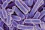 بكتيريا الأمعاء تنبئ بعمرك الحقيقي