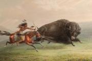 هكذا أبادت أميركا هذا الحيوان.. وطردت السكان الأصليين