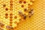 النحل يبهر العلماء .. قادر على تعلّم الرياضيات المجردة