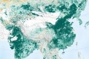 كوكبنا أكثر خضرة مما كان عليه قبل 20 عاماً