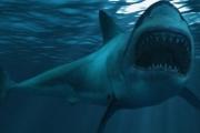 دراسة علمية: قاتل القرش الوحشي ربما لا يزال يعيش بمحيطاتنا