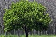روسيا.. 4 سنوات من السجن لمن يقطع شجرة