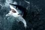 شهية البشر على زعانف ولحم أسماك القرش يهددها بالانقراض