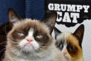 وفاة «جرامبي كات الغاضبة» أشهر قطة في الإنترنت