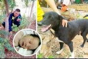 كلب أعرج ينقذ رضيعاً دفنته أمه حياً