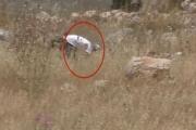 حرائق الحقول.. فيديو يكذّب الجيش الإسرائيلي ويدفعه للاعتراف