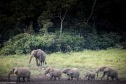 غضب إثر سماح بوتسوانا بصيد الفيلة مجدداً