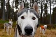 كلب يخبر صاحبته بإصابتها بالسرطان.. فكيف حدث ذلك؟