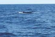 بالفيديو.. البلاستيك في كل مكان.. حتى أجسام الحيتان